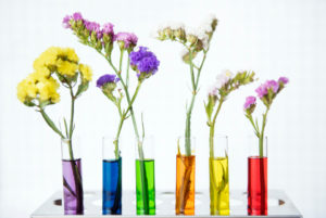 Vases filled with colorful water with colorful flowers.