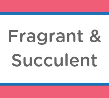 fragrant succulent