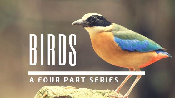 Storytime: Birds