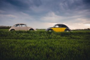 Two cars in a grass field