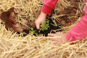 child planting flower