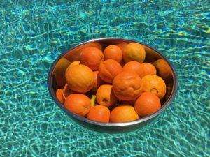 Oranges Pool