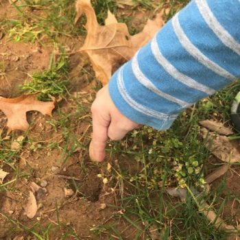Child's hand pointing to deer footprint